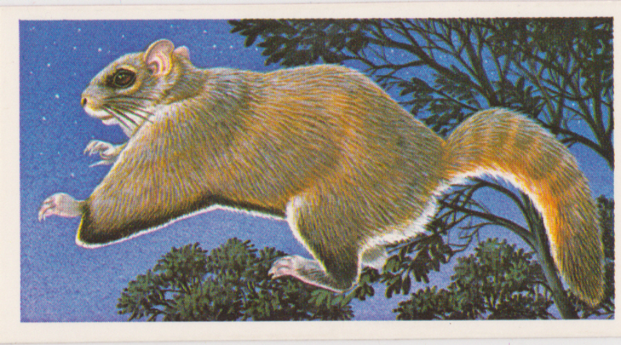 Brooke Bond Incredible Creatures ( Thick Cards Stickers ) No35