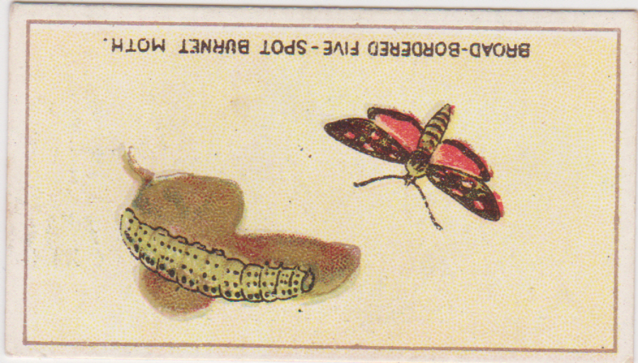 B A T Butterflies & Moths No 31 Printed Back no name