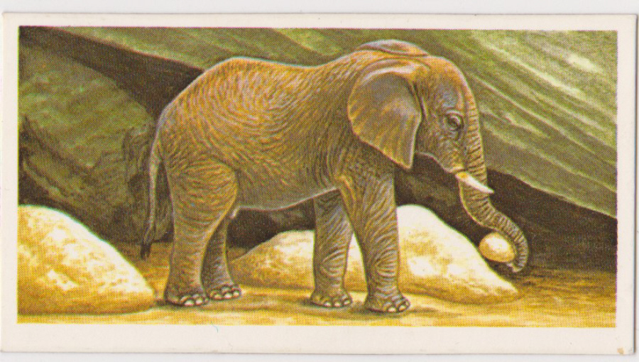 Brooke Bond Incredible Creatures ( Thick Cards Stickers ) No23